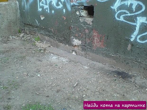 Найди кота на картинке! Фото №25