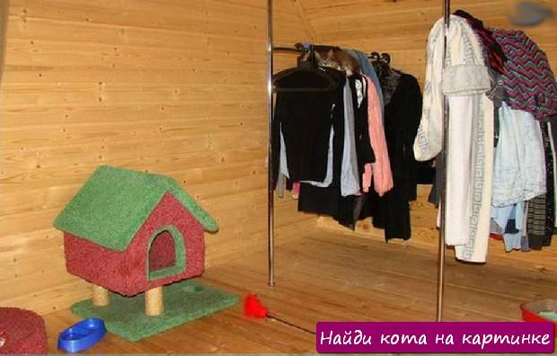 Найди кота на картинке! Фото №6
