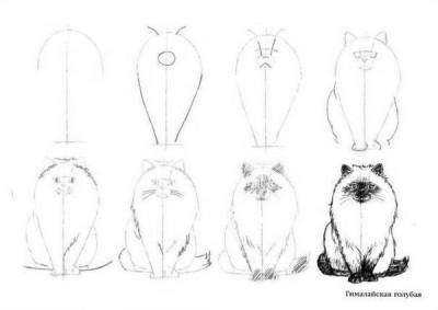 Как рисовать котенка. Схема №1