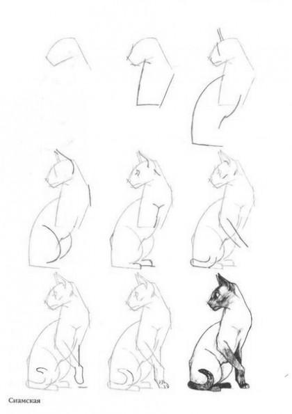 Как рисовать котёнка: схема № 6
