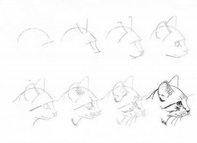 Как рисовать котёнка: схема № 7