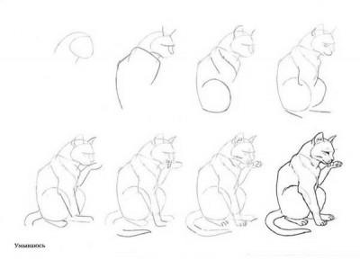 Как рисовать котёнка: схема № 8
