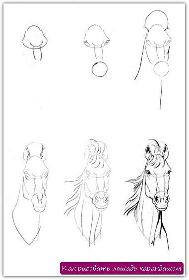 Как рисовать лошадь карандашом. Урок №11