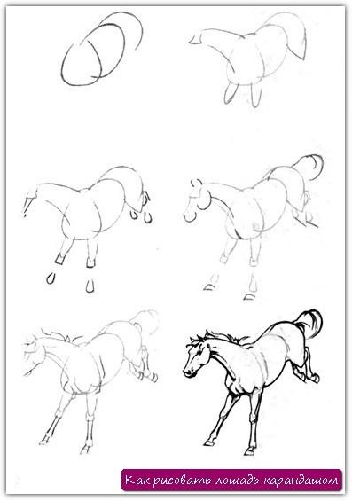 Как рисовать лошадь карандашом. Урок №1