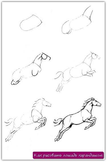 Как рисовать лошадь карандашом. Урок №13