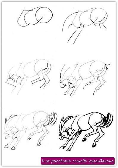 Как рисовать лошадь карандашом. Урок №14