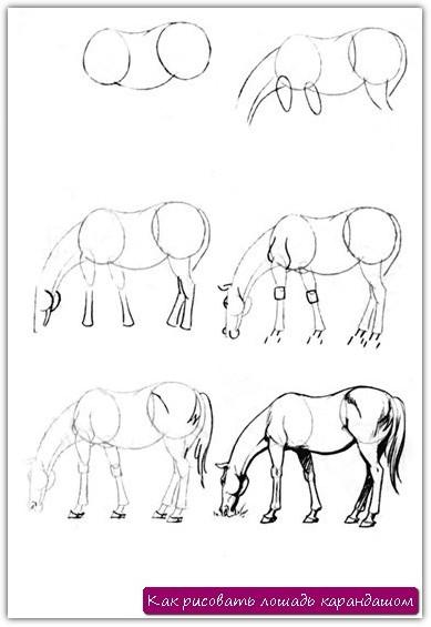 Как рисовать лошадь карандашом. Урок №17