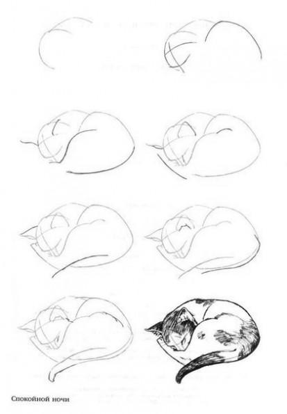 Как рисовать котёнка: схема № 18