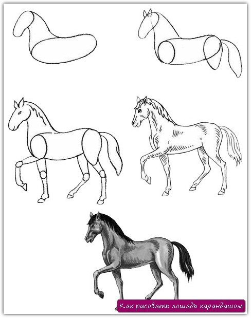 Как рисовать лошадь карандашом. Урок №2