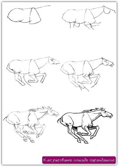 Как рисовать лошадь карандашом. Урок №20