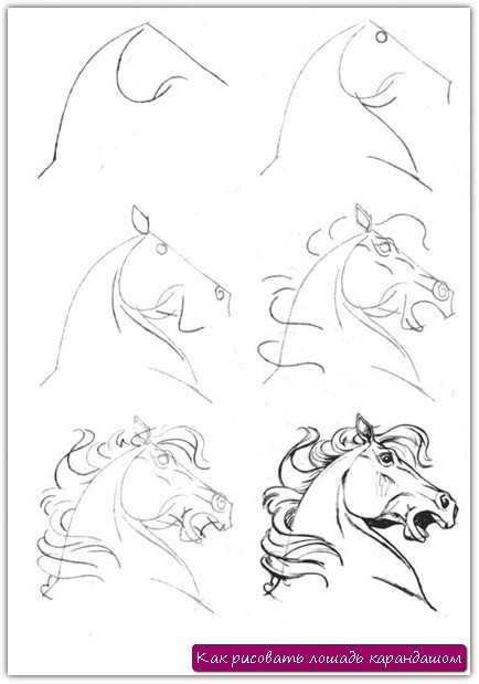 Как рисовать лошадь карандашом. Урок №3
