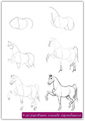 Как рисовать лошадь карандашом. Урок №8