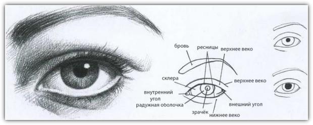 Как нарисовать портрет карандашом: пример №3