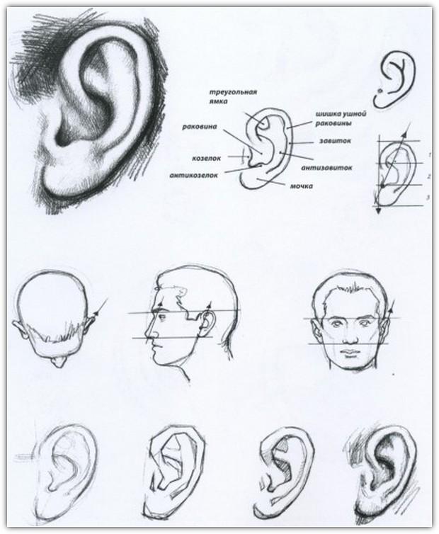 Как нарисовать портрет карандашом: пример №7
