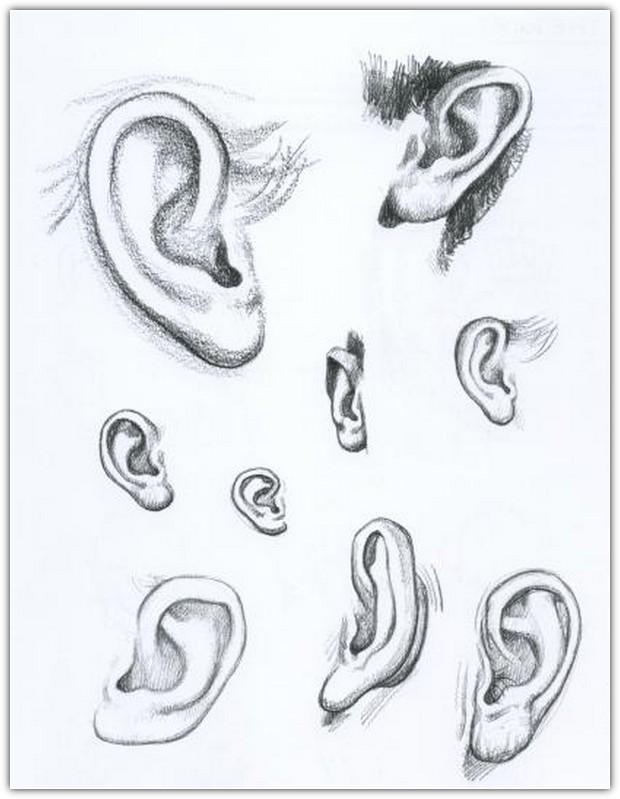 Как нарисовать портрет карандашом: пример №8