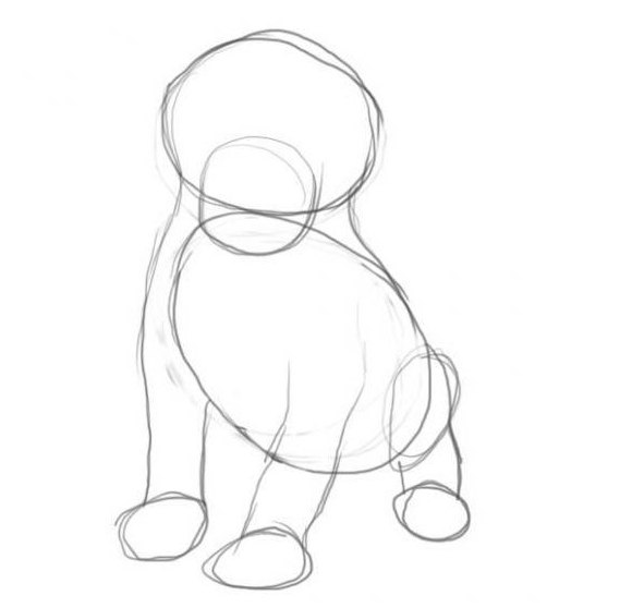 Как нарисовать собаку карандашом: этап №2