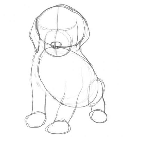 Как нарисовать собаку карандашом: этап №3
