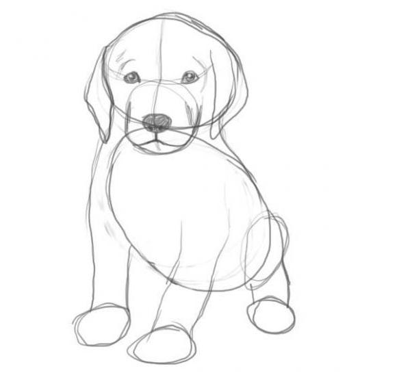 Как нарисовать собаку карандашом: этап №4