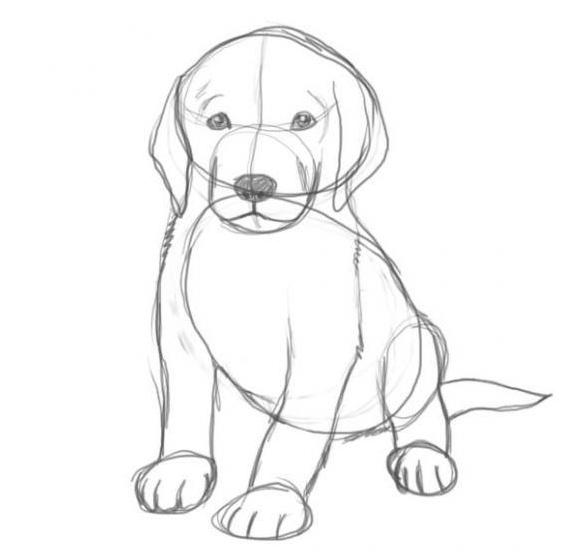 Как нарисовать собаку карандашом: этап №5