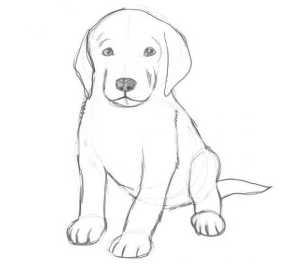 Как нарисовать собаку карандашом: этап №6