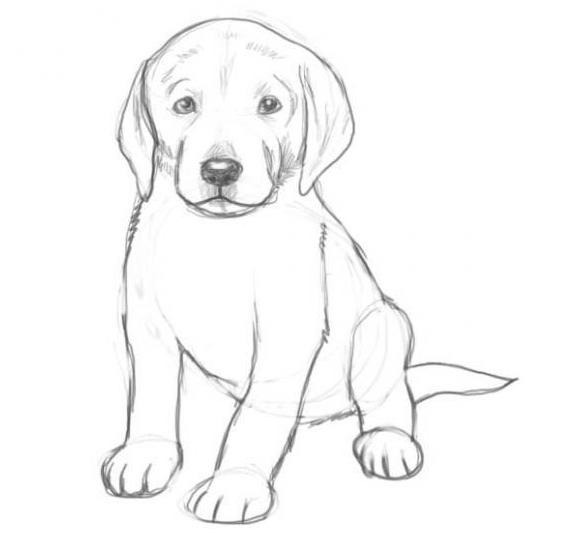 Как нарисовать собаку карандашом: этап №7