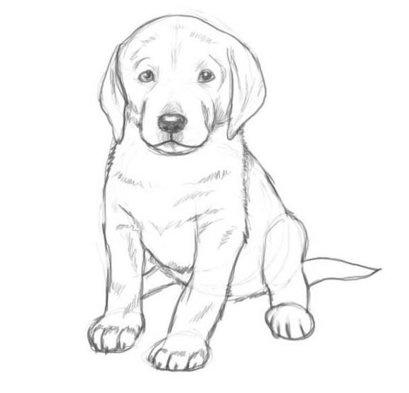 Как нарисовать собаку карандашом: этап №8