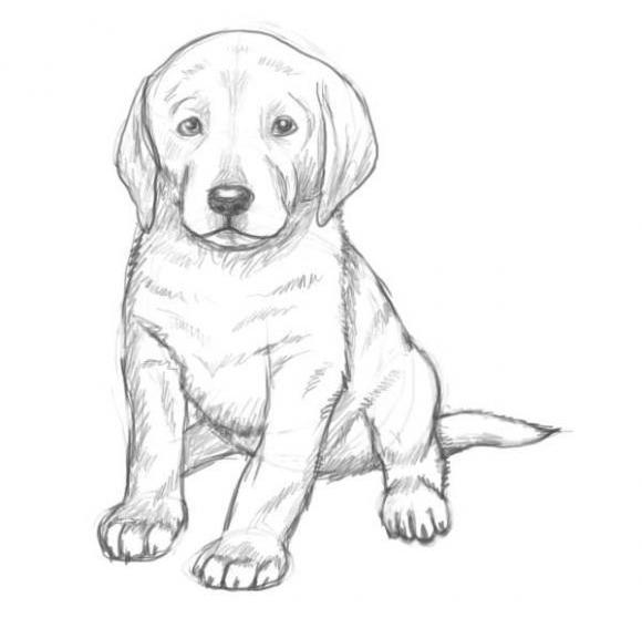 Как нарисовать собаку карандашом: этап №9