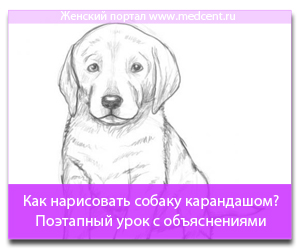 Как нарисовать собаку карандашом? Поэтапный урок с объяснениями