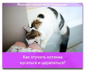 Как отучить котенка кусаться и царапаться?