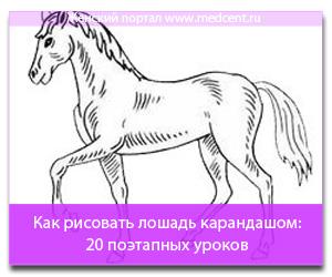 Как рисовать лошадь карандашом: 20 поэтапных уроков