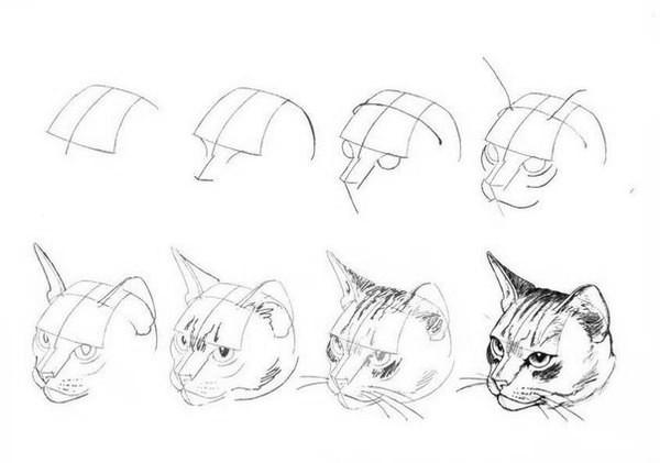 Как рисовать котёнка: схема №